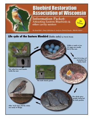 fillable online braw life cycle of the eastern bluebird