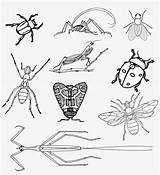Insects Coloring Bugs Realistic Beetle Bee Fly Ant Transparent Vector Donate Detail sketch template