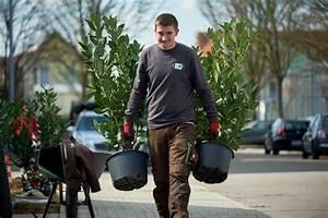 Kirschlorbeer Als Hecke : ihr gartenpflegeteam ~ Michelbontemps.com Haus und Dekorationen