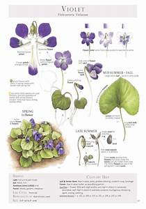 26 Best Anatomy Of A Flower Images On Pinterest