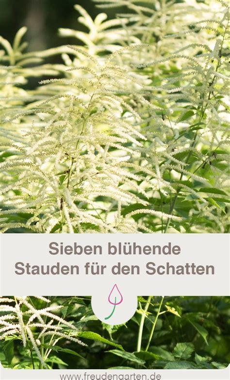 Blühende Pflanzen Schatten by Sieben Bl 252 Hende Winterharte Stauden F 252 R Den Schatten