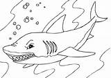 Shark Coloring Pages Whale Printable Tiger sketch template