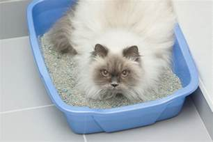 what can i give my cat for diarrhea my cat has diarrhea what do i do