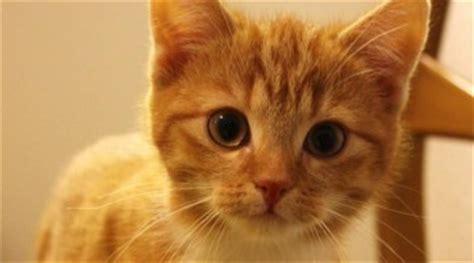 epilepsie bei katzen ursachen symptome catplusde