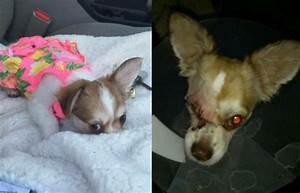Justice Served! Mayble the Dog's Abuser Ordered Jail Time ...