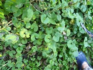 Invasive Water Weeds