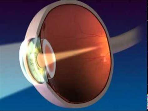 anatomy  function   eye youtube