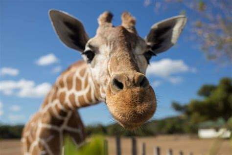Exotic Animals Banned From Los Angeles House Parties ...