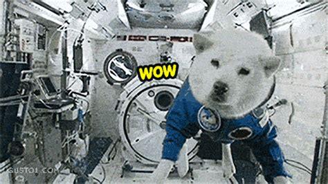 stray  space dog  story  belka  strelka