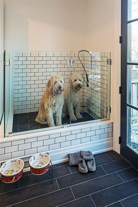 fun house design ideas   pets