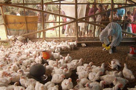 Delhi Govt Battles Bird Flu Threat Ghazipur Poultry