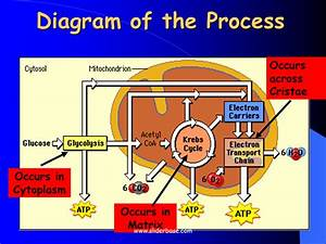 Diagram Of The Process