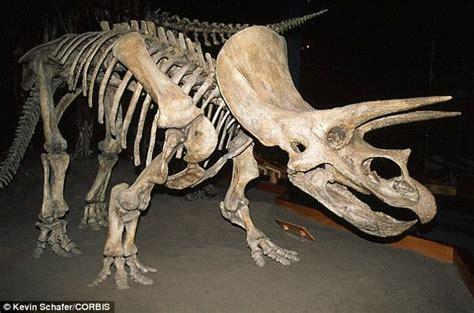 Protoceratops Dinosaurs' Facial Features Including Frills
