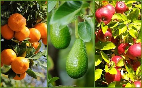 fruits garden pictures 9 secrets to get more fruit from your garden