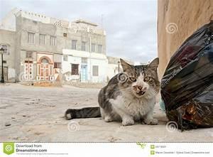 Homeless Cat In Tunisia Stock Image - Image: 24778501