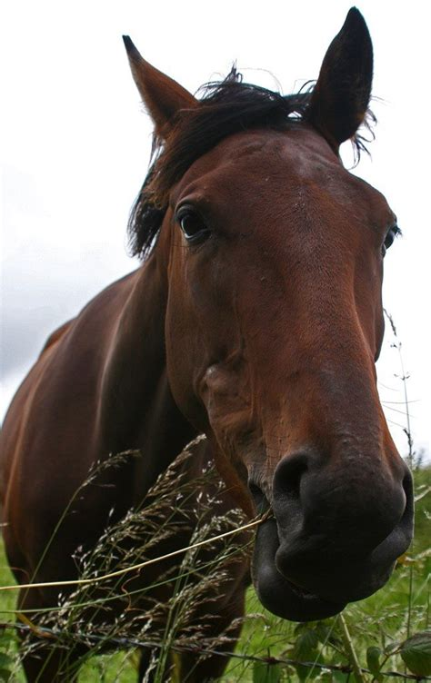 horses poisonous plants horse trees plant common dangerous harmful round peddle pen cute gardeningknowhow really