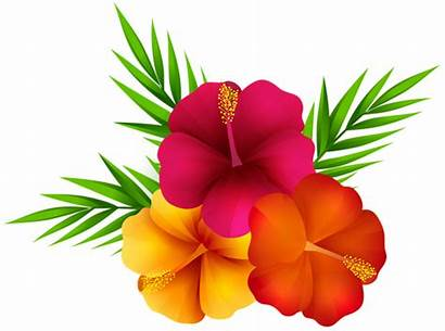 Tropical Flowers Flower Transparent Clipart Clip Background