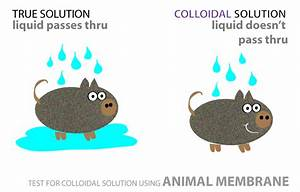 Properties Of Colloids - Surfguppy - Chemistry Made Easy