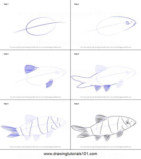 draw  clown loach printable step  step drawing
