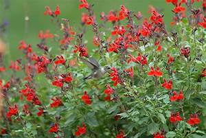 Highland Park, TX - Official Website - Garden Area 4