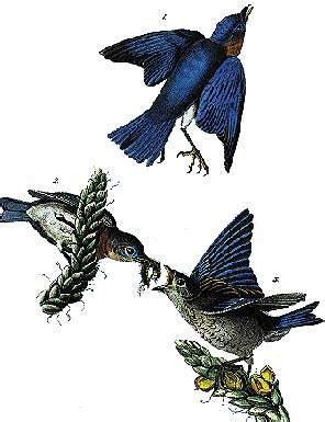 york state bird eastern bluebird statescom