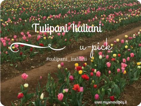 Tulipani Italiani Upick Ed è Pura Magia A Cornaredo