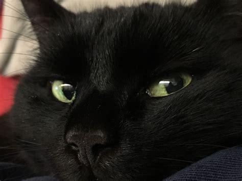 a x hitam black cats