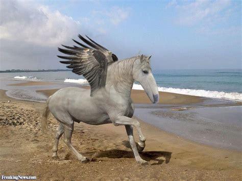 wings horse beach animals