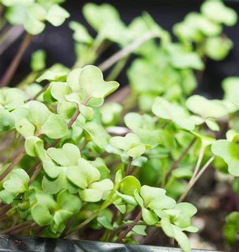 grow light seedlings artificial light for seedlings grow lights