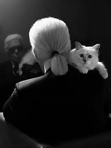 Choupette Chat Karl : grumpy cat choupette ces chats qui rapportent le figaro madame ~ Medecine-chirurgie-esthetiques.com Avis de Voitures