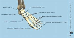 The Classification Of The Joints In Foot And Ankle
