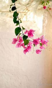 ℒ o v e l i n e s s | Beautiful flowers, Pretty flowers ...
