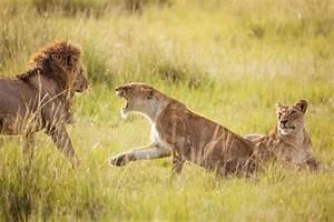 Vitesse Des Animaux : safari photo 16 conseils pour r ussir vos photos ~ Medecine-chirurgie-esthetiques.com Avis de Voitures