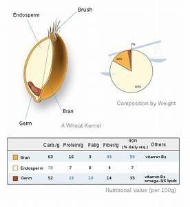 File Wheat-kernel Nutrition Svg