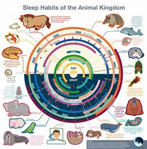 Data Clock Chart The Sleeping Time Of Different Animals Infographic