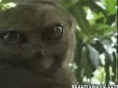 lemur GIFs | Find, Make & Share Gfycat GIFs