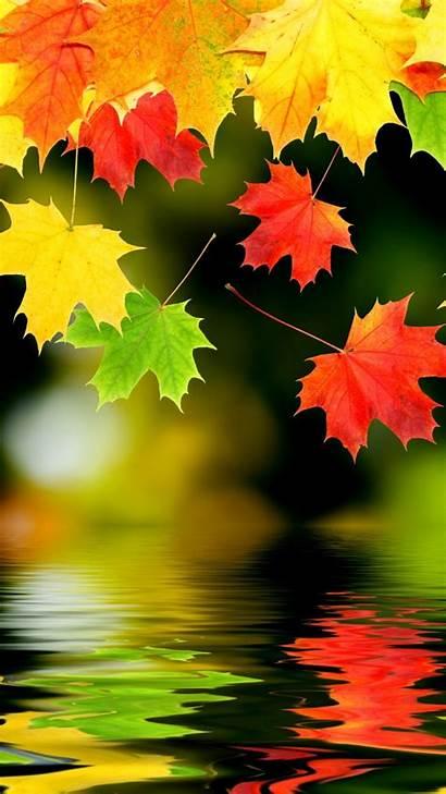 Lockscreen Foliage Autumn Wallpapers Kolpaper Backgrounds
