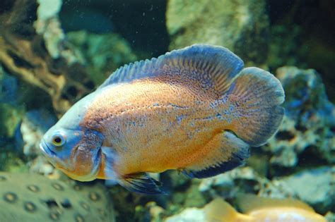 pixelistes concours aquarium de limoges autres rencontres