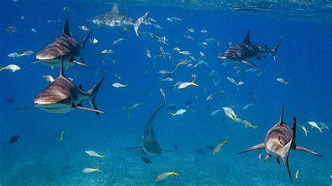 diving bimini bahamas  scuba ladys blog