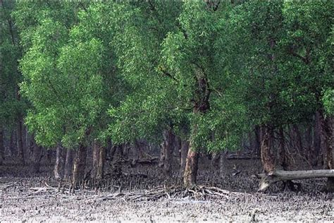 irfan alwi fungsi hutan mangrove