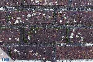 Weißer Schimmel An Der Wand : salpeter wand swalif ~ Michelbontemps.com Haus und Dekorationen