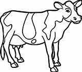 Cow Coloring Pages Drawing Printable Farm Face Animal Cattle Colouring Easy Cartoon Adults Getcolorings Clarabelle Cows Mask Strange Coloringbay Clipartmag sketch template