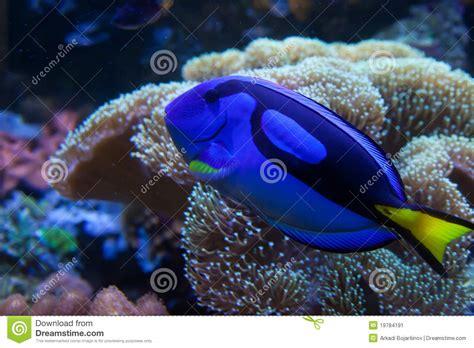 poissons exotiques d aquarium image stock image 19784191
