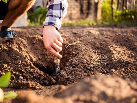 wann pflanzen wann bodendecker pflanzen 187 die beste pflanzzeit