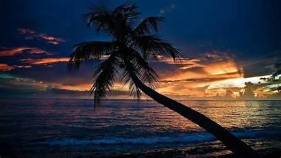 Beach Night Desktop Sunset Romantic Background Palm