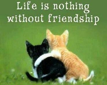 cute friendship quotes  friendship sayings finding