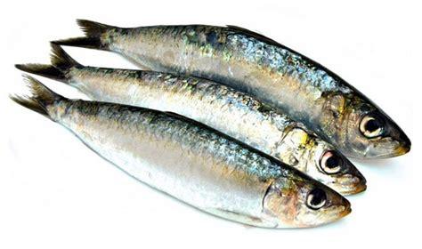 cuisiner des sardines fraiches sardines à la poêle recette facile et temps de cuisson