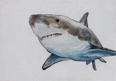 great white shark tumblr
