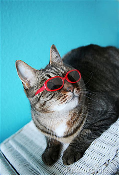 cool cat royalty  stock images image