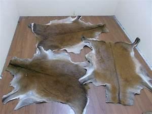 Tanning A Deer Hide Related Keywords - Tanning A Deer Hide ...